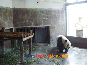 Photo of Chengdu Panda Base