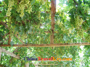 photo of Turpan Grape Valley